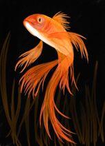 Goldfish-fm-1