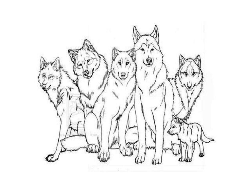 Image - Wolf-pack-coloring-pages-11.jpg | The Family Series Wiki ...
