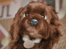 Mother Tia Jessica Becerra is Dogs-1