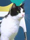 CatnissCat