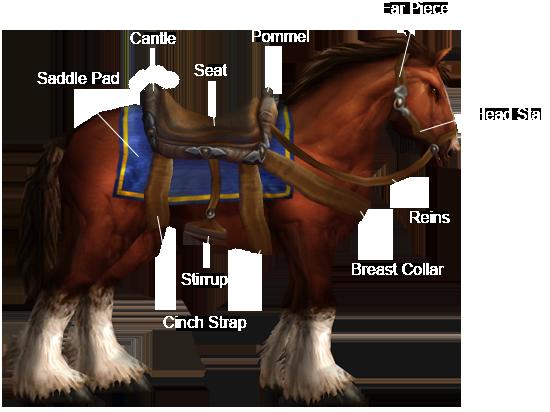 TFR Horsemanship anatomy
