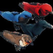 Oiseaux01