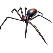 Araignées01