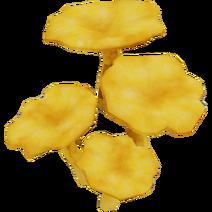 Chanterelle Mushroom01