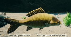 Fish Carp Normal