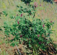 Bush flowering
