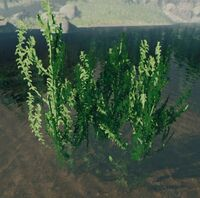 Bush pondweed