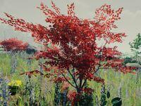 Bush red
