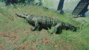 Alligatornohud
