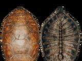 Панцирь черепахи