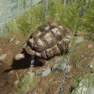 TortoiseCutout