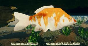 Fish Carp Big