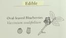 Edible berries