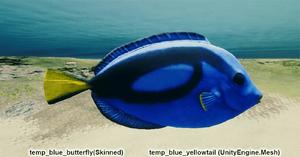 Fish Blue Yellowtail