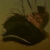 Lurkfish frontpage