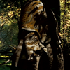 Megasquid frontpage
