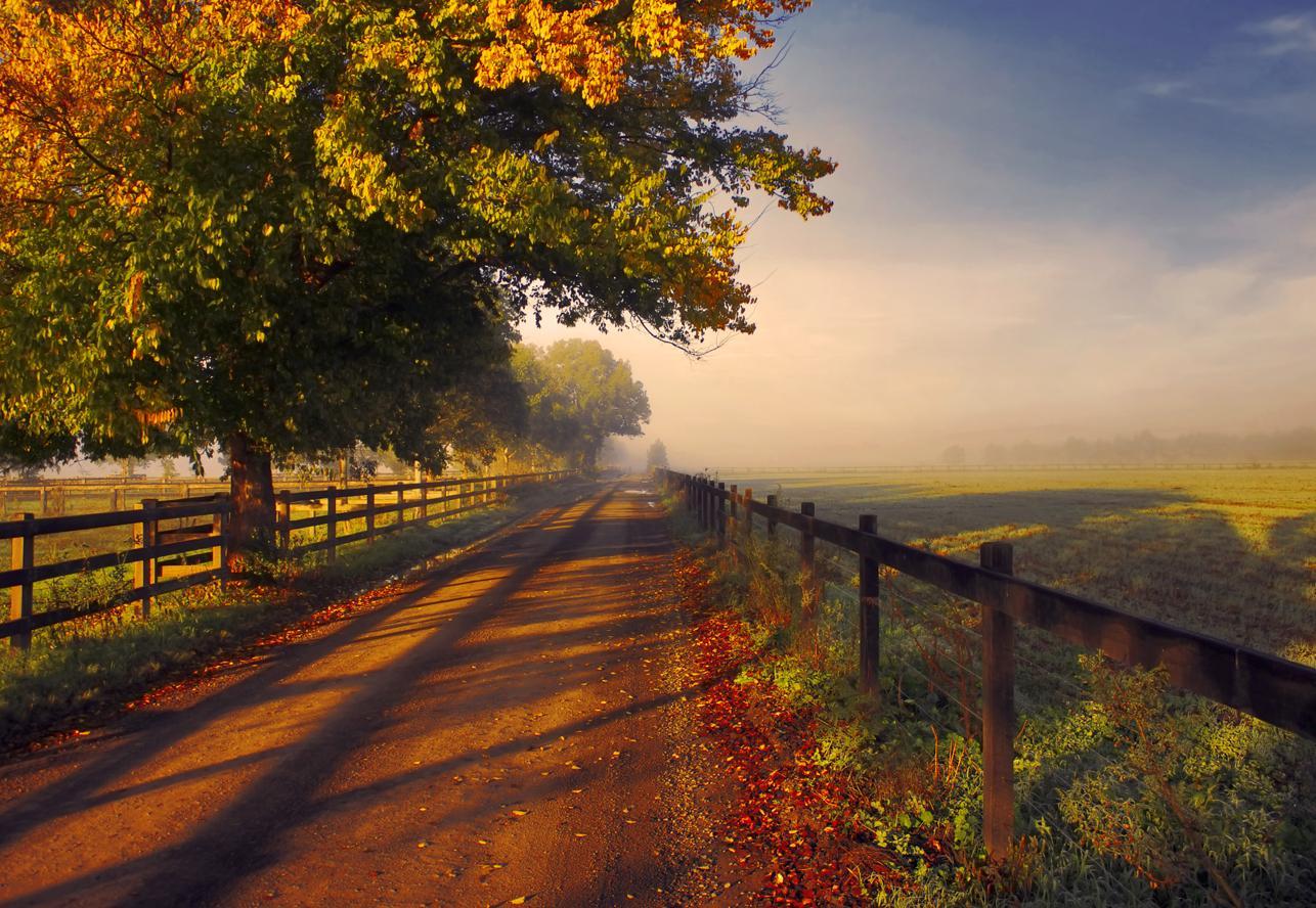 Autumn Dirt Road Wallpaper Background 25981