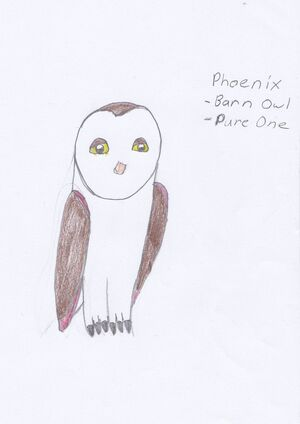Phoenix as a pure one barn owl