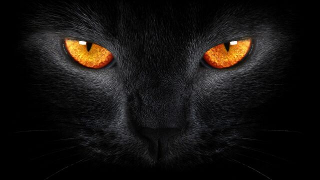 File:Black-cat-yellow-eyes-1920x1080.jpg