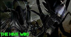 Hive Wiki