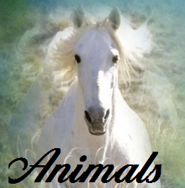 File:Animals.png