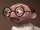 Bernie Kropp