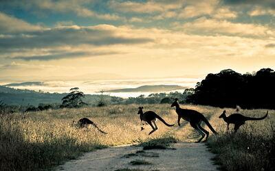 Kangaroo-moving