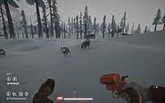 Нападение серых волков