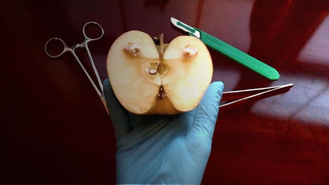 File:Tooth applemod.jpg