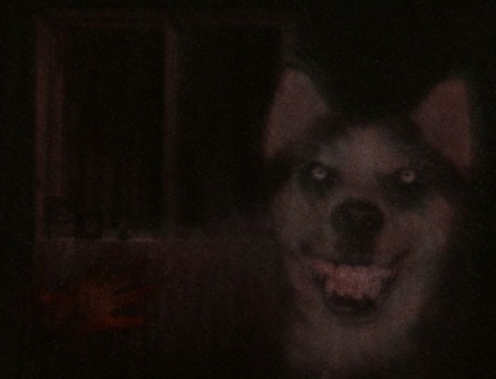 smile dog the many adventures of minecraft rogers wikia