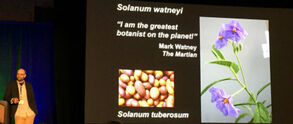 Solanum Watney 2