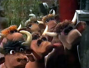 Muppet cows