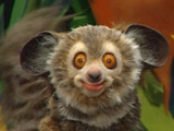 Billy Bob the Lemur