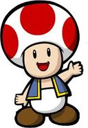Toad 101