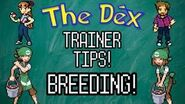 Trainer Tips 7 Thumbnail