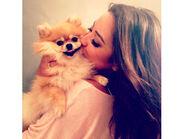 Sophia's dog