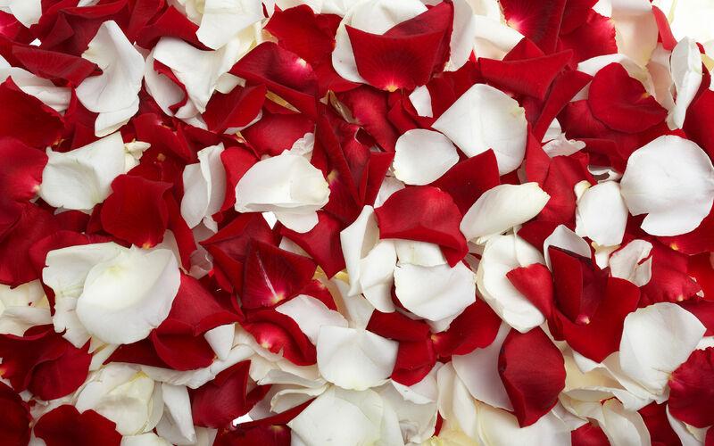 Rose-Petals-yorkshire rose-26278359-2560-1600
