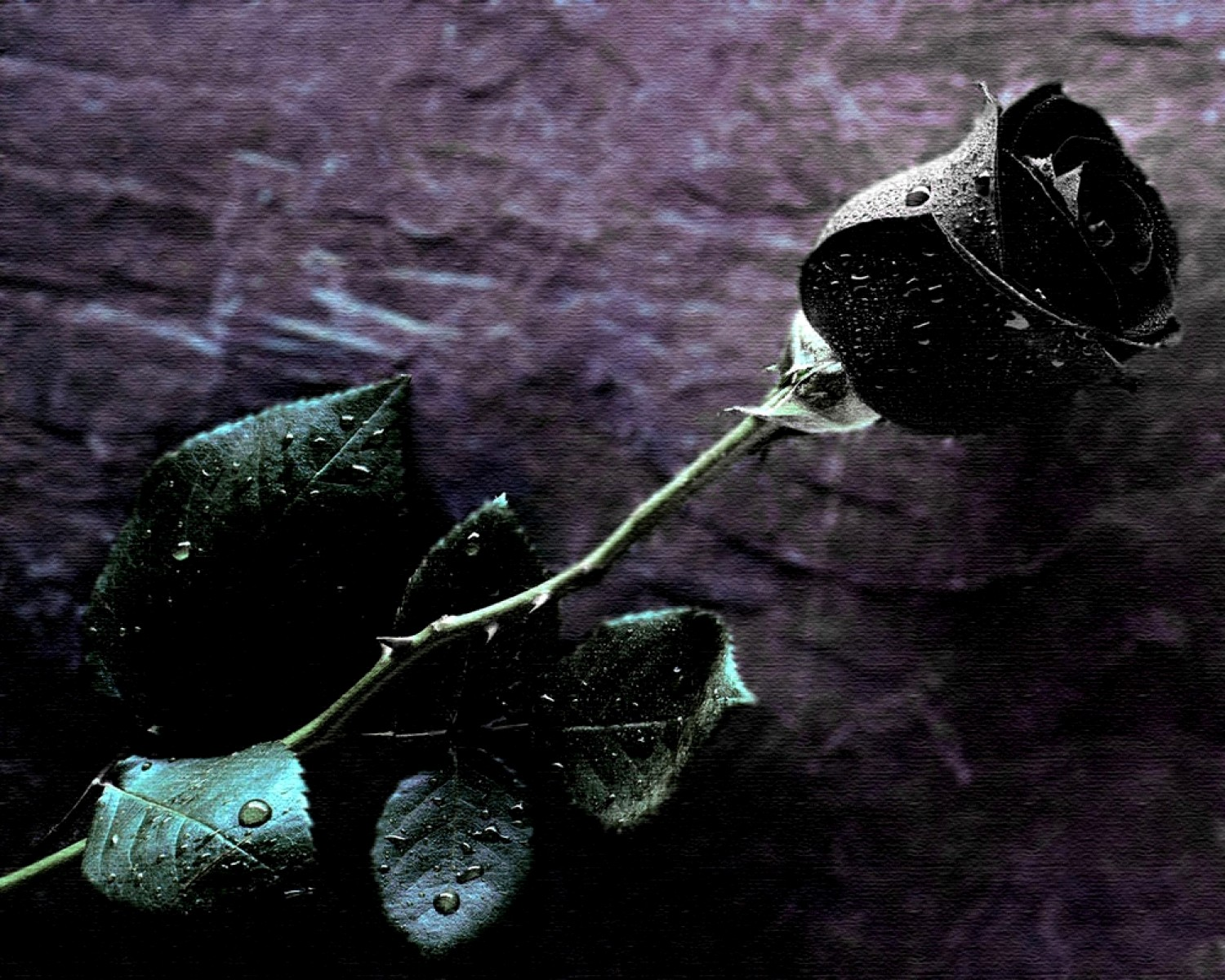 Image black rose singleg the originals fanfiction wiki black rose singleg voltagebd Choice Image