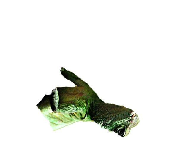 File:1 half lizard.jpg