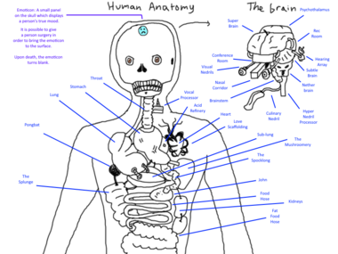 Other Anatomy