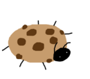 Cookie Beetle