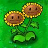Twin Sunflower2