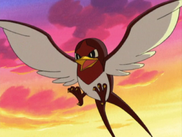 Taillow anime-3-