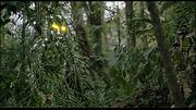 Predator-cloak-image-01 1198187731 640w