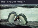 Antarctica (album)