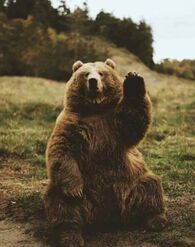 Bearymcbear