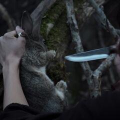 Tituba's sacrificing a rabbit to necromancy