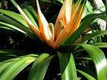 Arborea Plant