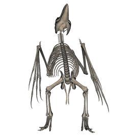 Bird skeleton by markopolio stock