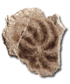 C028 Relics Past i05 Jellyfish cast.png